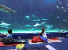 Dormir entre tiburones Oceanografic Valencia