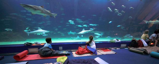 Dormir con tiburones en el oceanografic valencia for Oceanografic valencia precio 2016