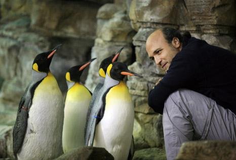 Oceanografic Valencia Conociendo los pinguinos