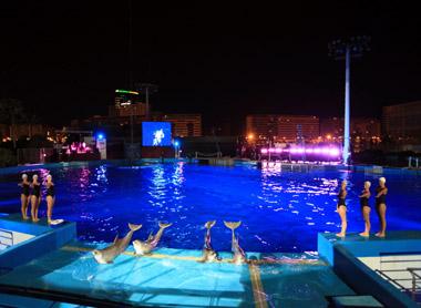 Noches de Oceanografic Valencia