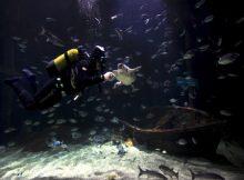 Cursos del medio ambiente marino en el Oceanografic Valencia