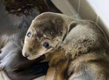 oceanografic valencia leones marinos valencia california