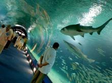 oceanografic valencia tiburones