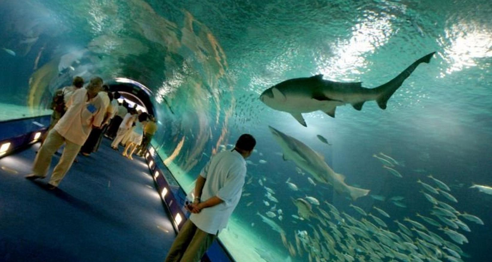 Especies de tiburones en oceanografic valencia for Precio oceanografic valencia 2016